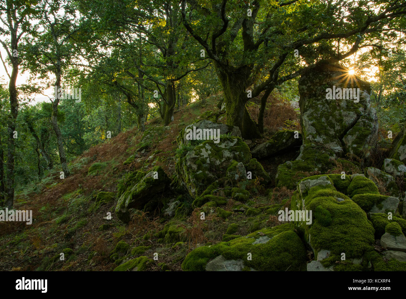 Sun makes a star between trees in deep forest in Guipuzkoa Vasque Country (Euskadi, Spain). - Stock Image
