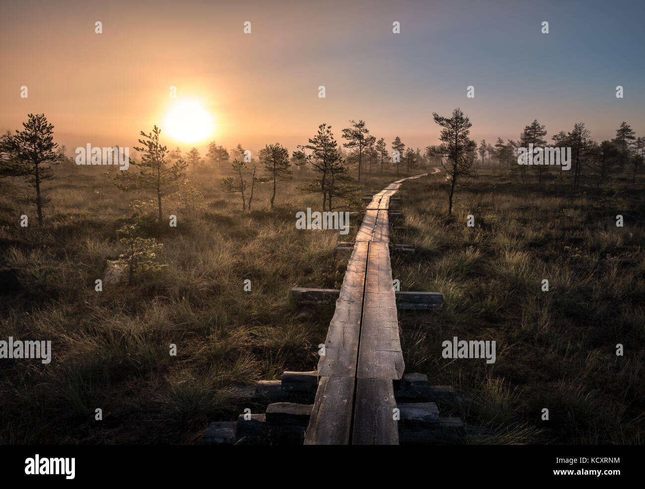 Scenic view from swamp with wooden path at autumn morning in Torronsuo National park, Finland - Stock Image