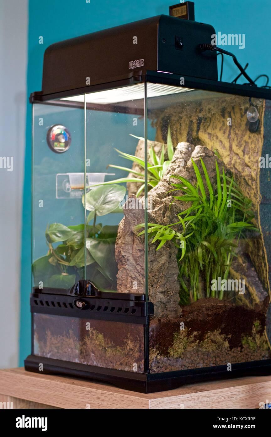 Exo Terra Vivarium For Crested Gecko Stock Photo Alamy