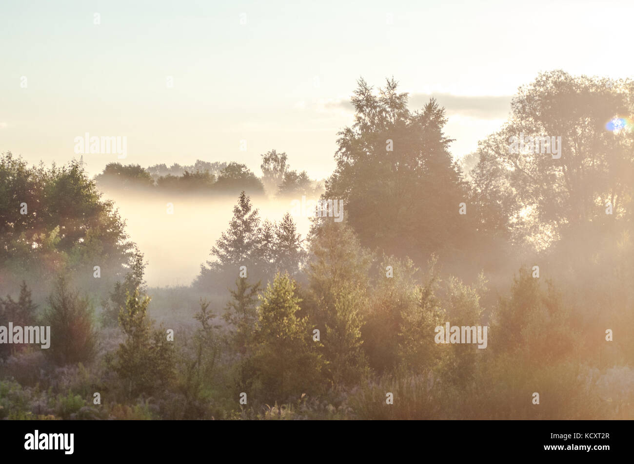 Beautiful morning scene. Latvian landscape with foggy fields. - Stock Image