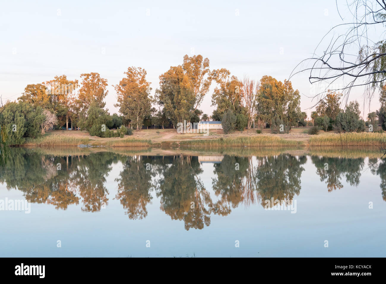 Trees on Die Eiland (the island) reflected at sunset on the Orange River at Upington, a town in the Northern Cape - Stock Image