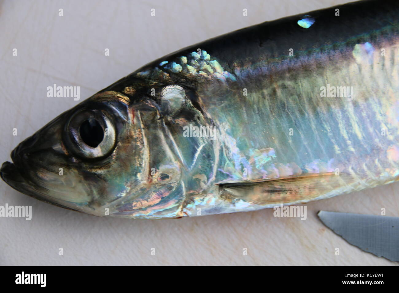 Symbolic picture of the fishing quote of the European commission: Herring from the Baltic Sea. - Stock Image