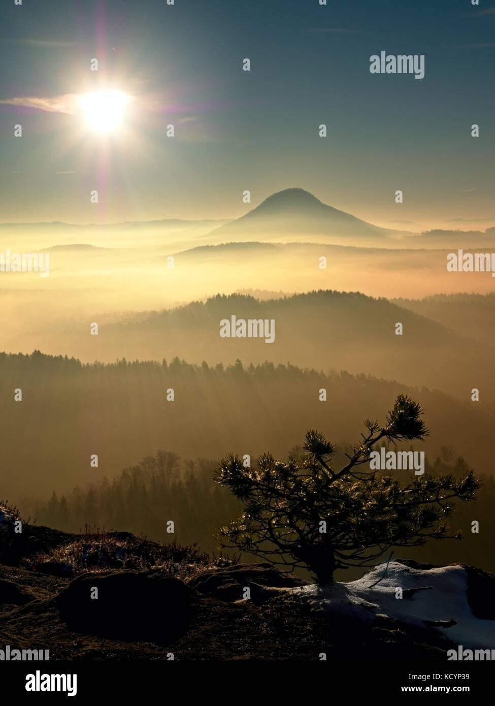 First snow flakes in needles of wild bonsai of pine on sandstone rocks. Blue mist in valley below peak. Autumnal - Stock Image
