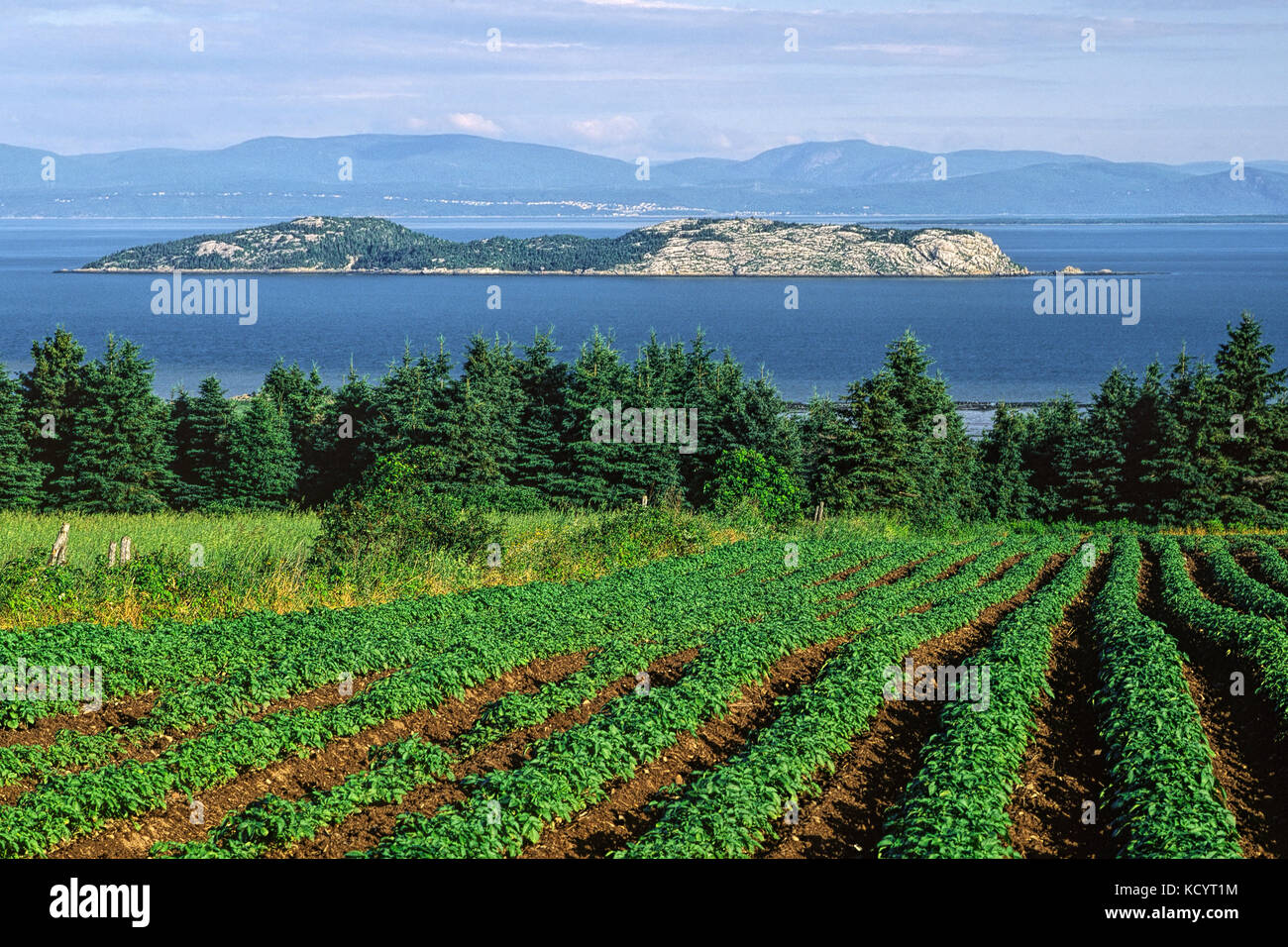 View from a potatoes field toward Pélerins Islands and the north shore of the Saint-Lawrence river, Cacouna, - Stock Image