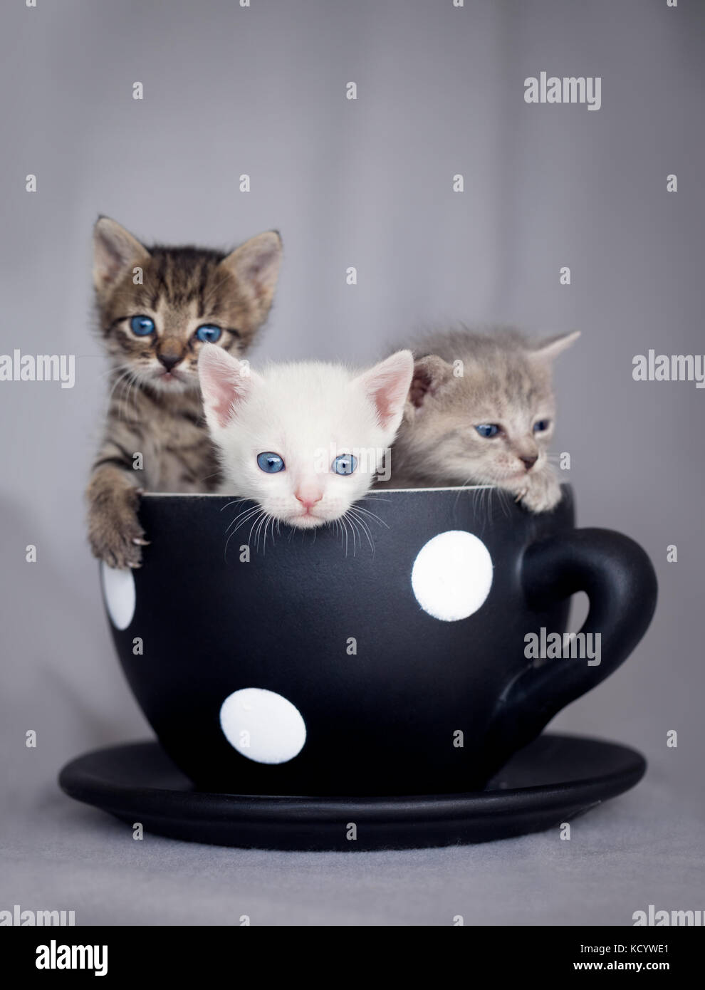 Three cute kittens sitting in large cup - Stock Image