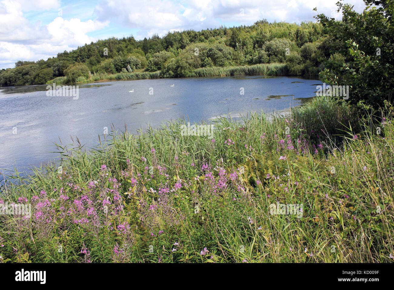 Pearsons Flash - part of Wigan Flashes Nature Reserve - Stock Image