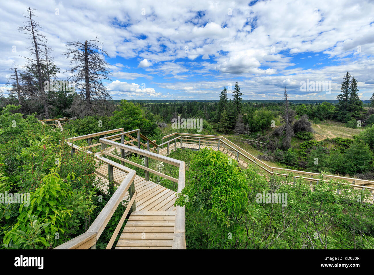 Wooden boardwalks leading to the Spirit Sands, Spruce Woods Provincial Park, Manitoba, Canada. - Stock Image