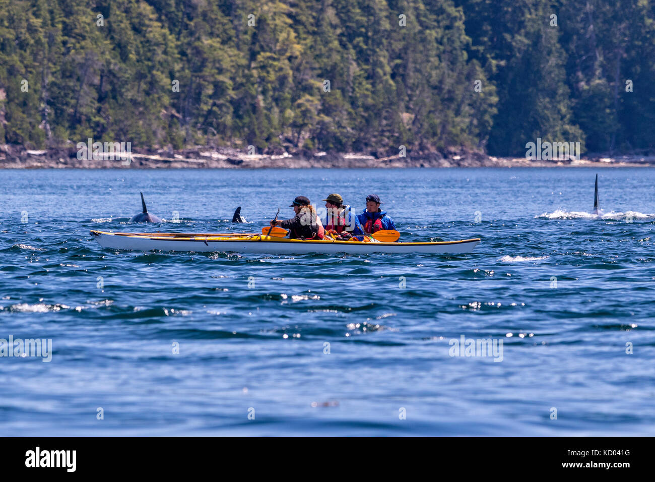 Kayaking Johnstone Strait Vancouver Island