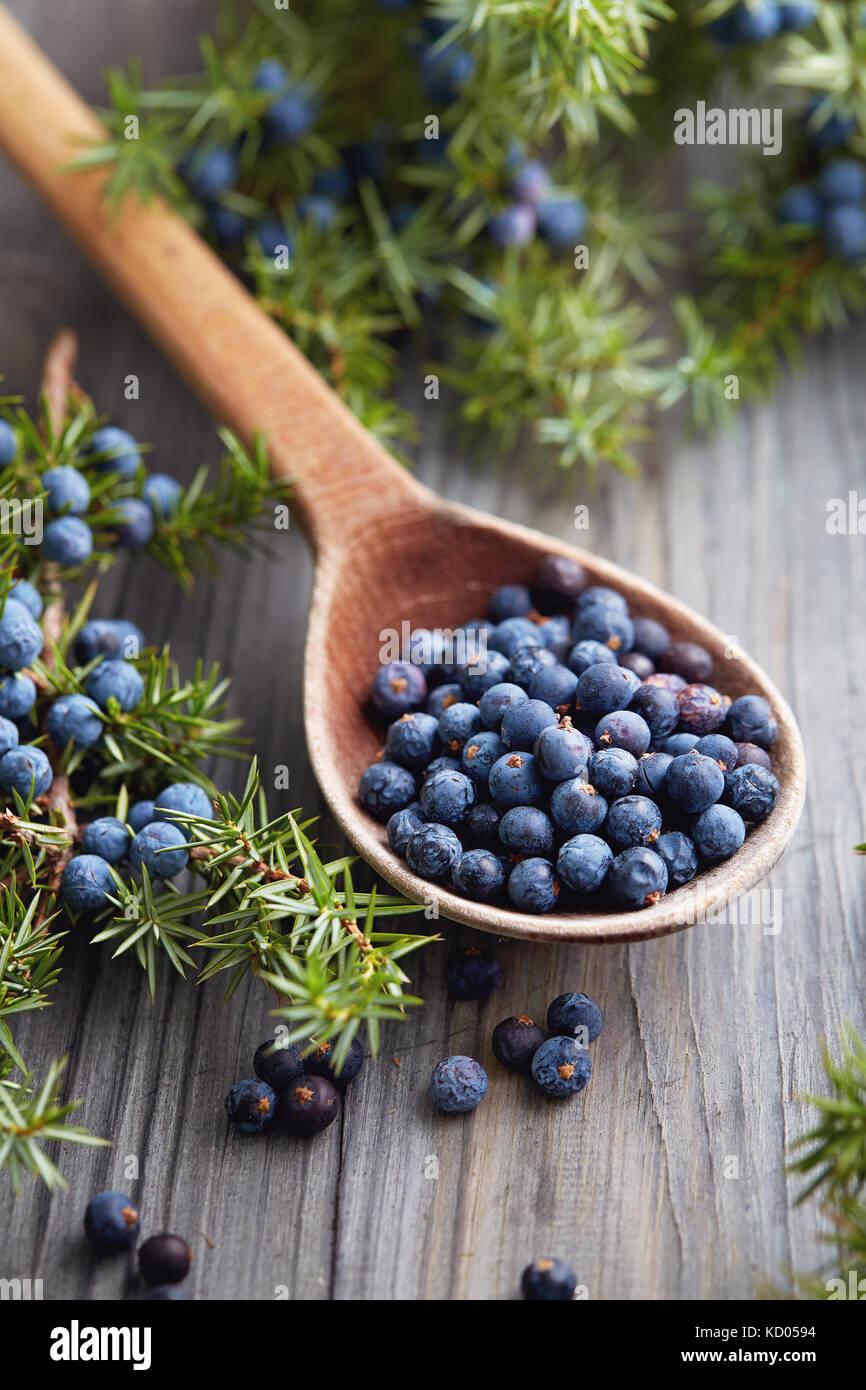 Wooden spoon with seeds of juniper. Juniper branch with berries. - Stock Image