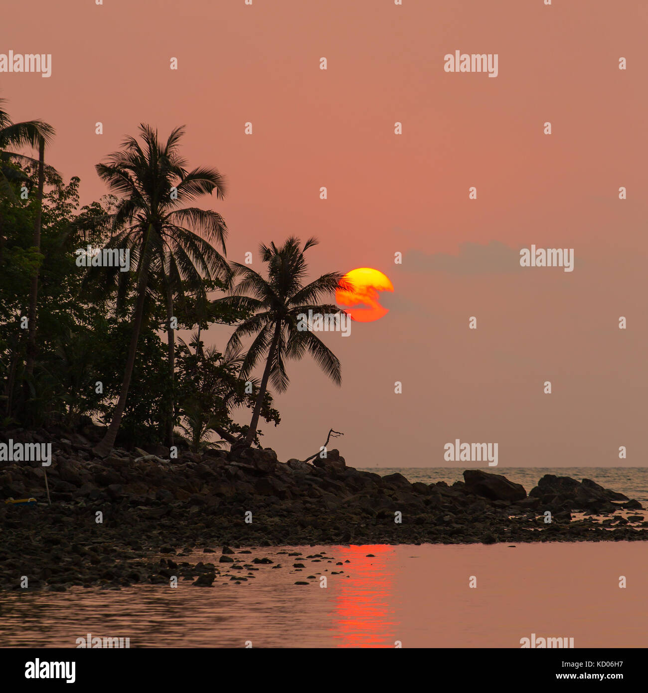 Palm trees silhouette at the sunset, Thailand - Stock Image