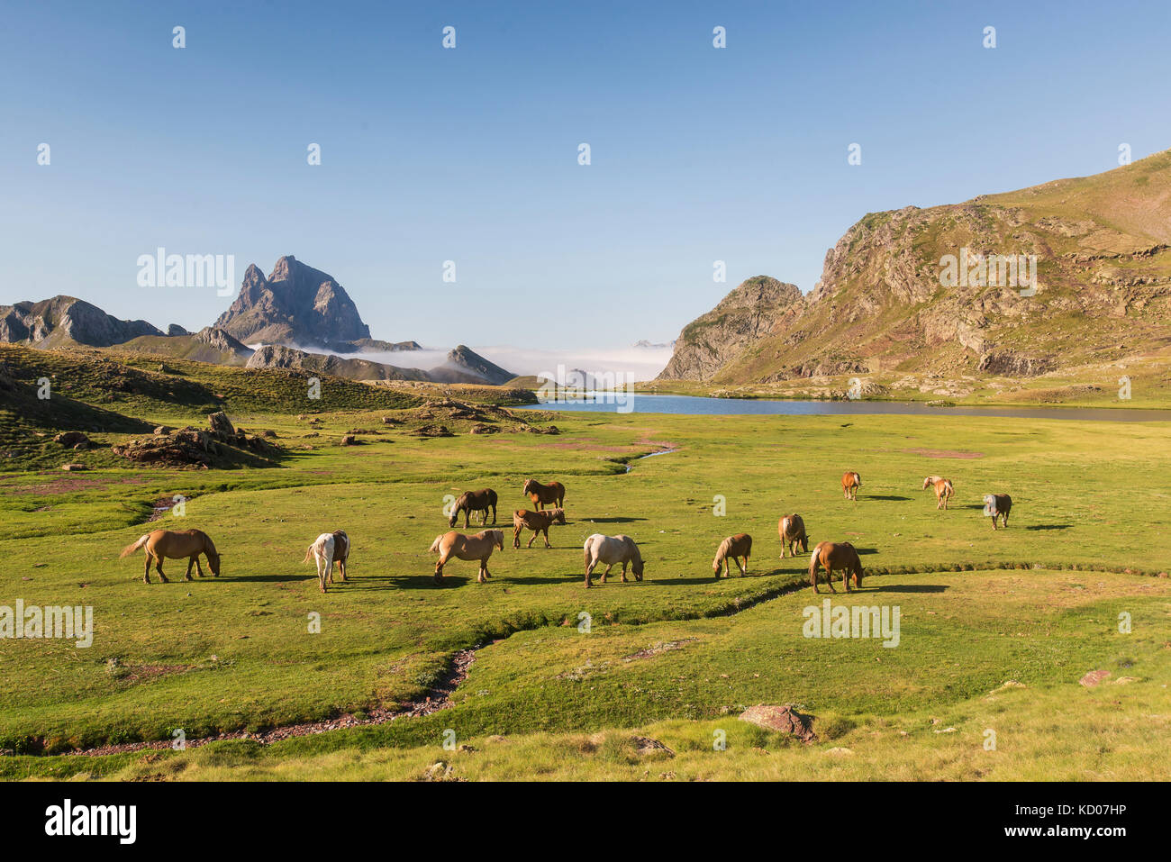 Lakes of Anayet and wild horses in Pyrenees, Spain. Stock Photo