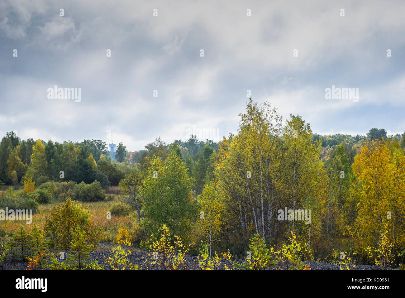 cloudy skyes over landscape with trees - Stock Image