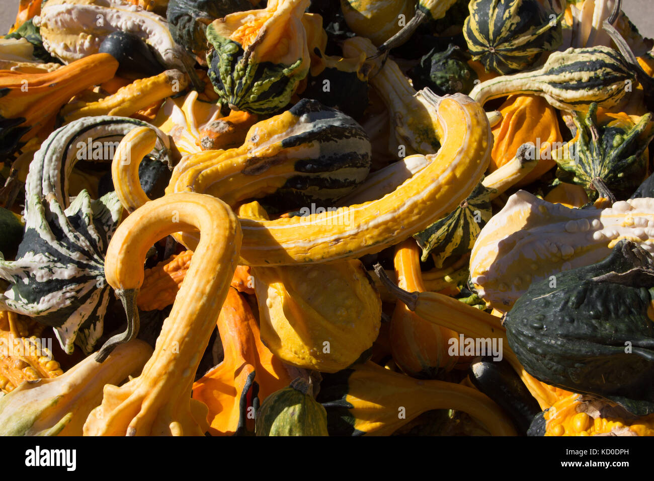 Decorative Gourds On Sale For Fall Stock Photo 162894665 Alamy