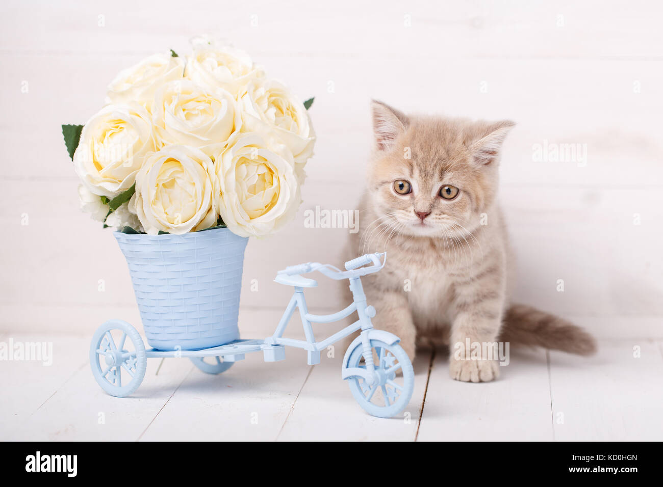 White Cat Red Roses Stock Photos & White Cat Red Roses Stock Images ...