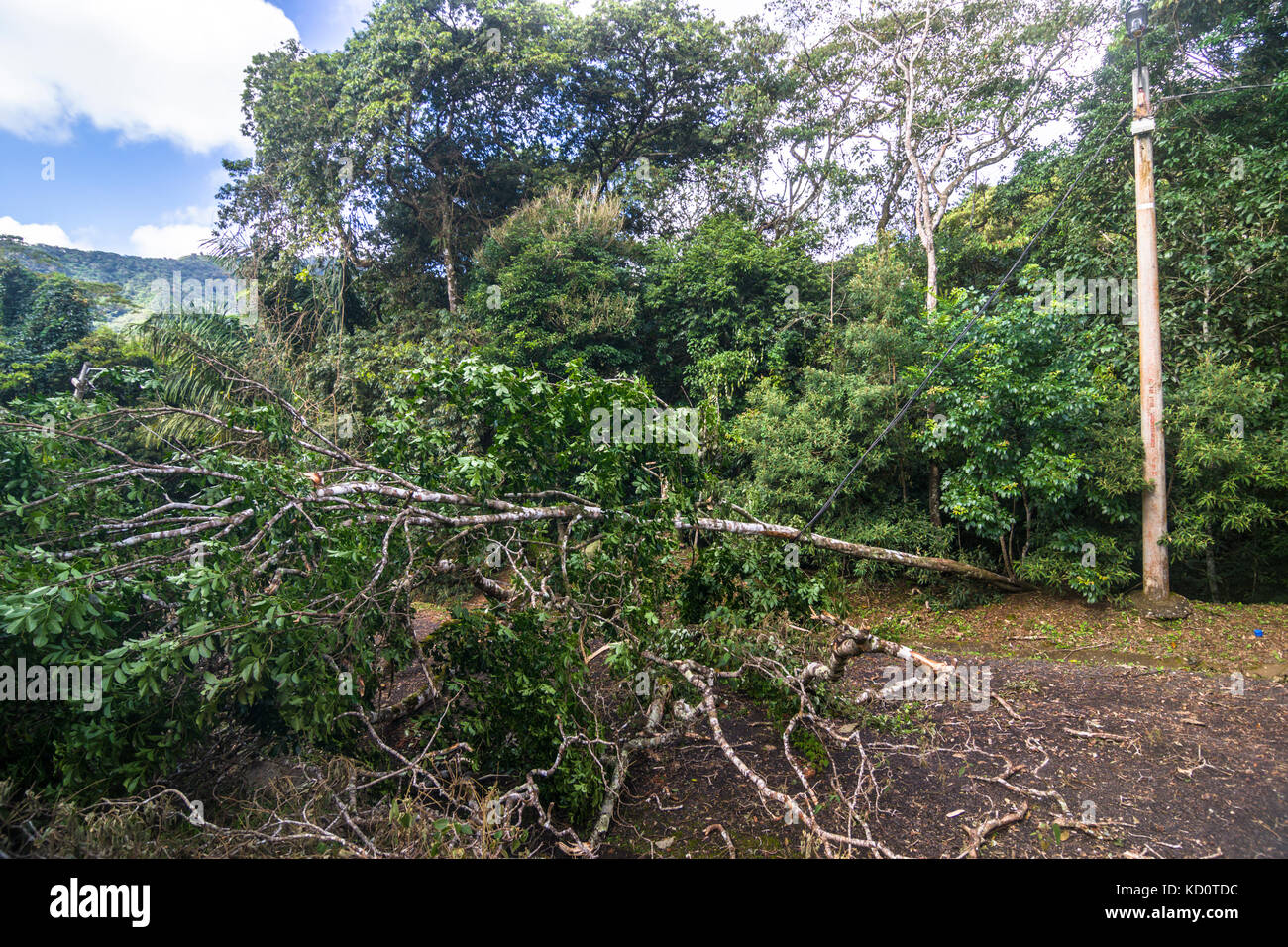 Trees and electric power lines down after strong tropical storm force damaging winds near El Valle de Anton, Panama. - Stock Image
