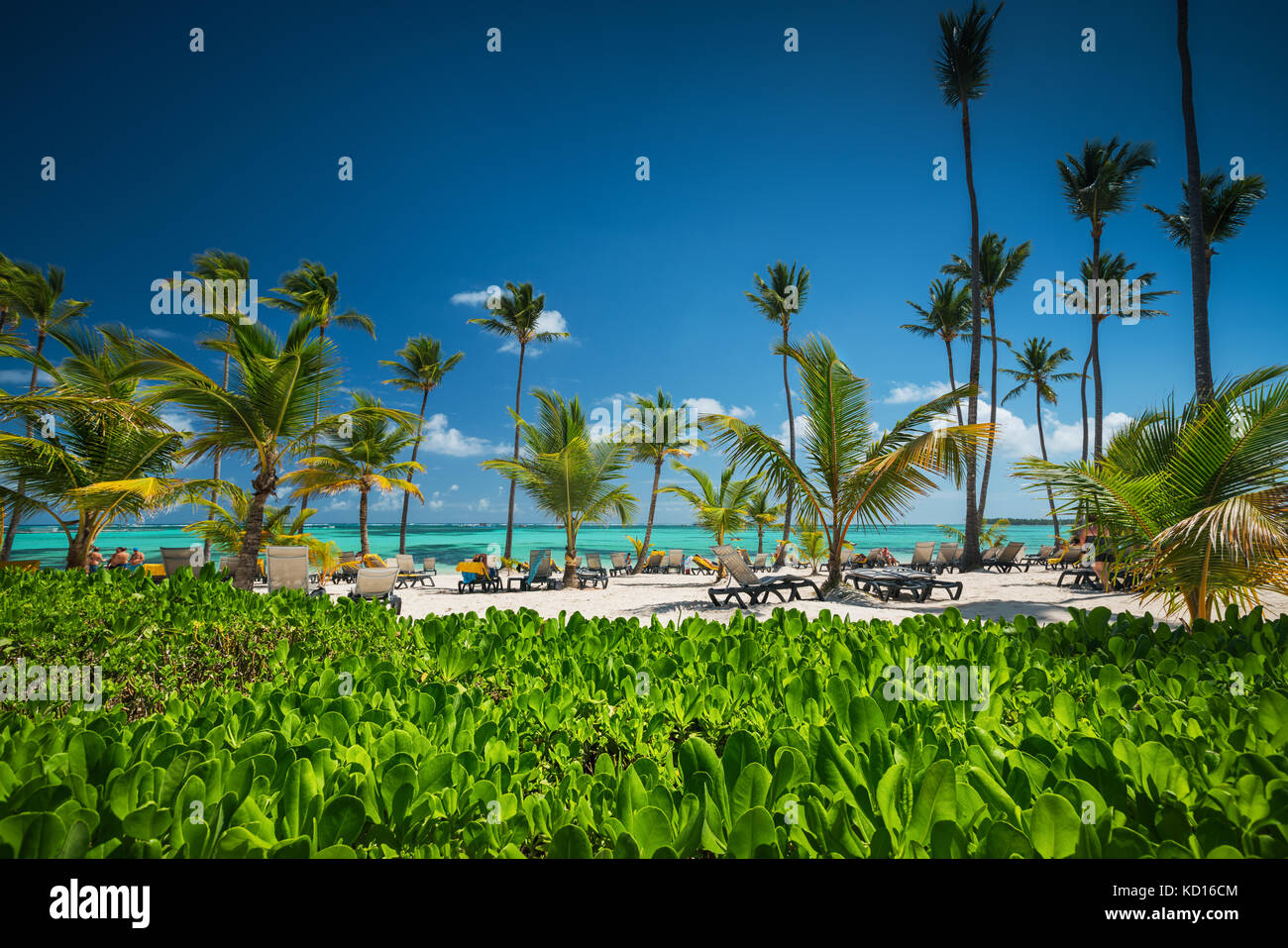 Palm tree on the tropical beach - Stock Image