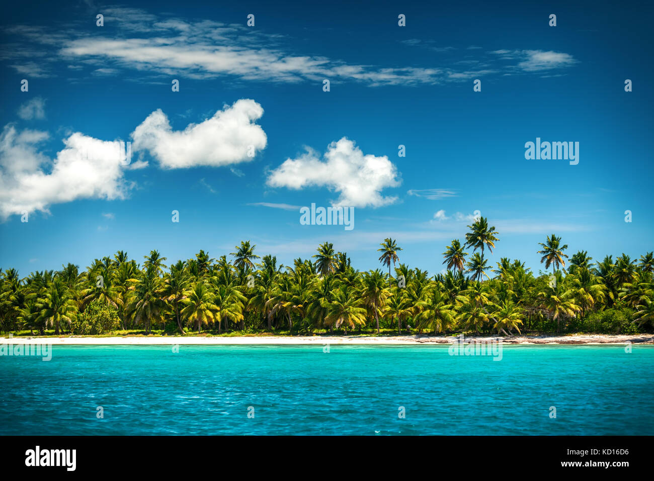 Palm and tropical beach,Dominican Republic - Stock Image