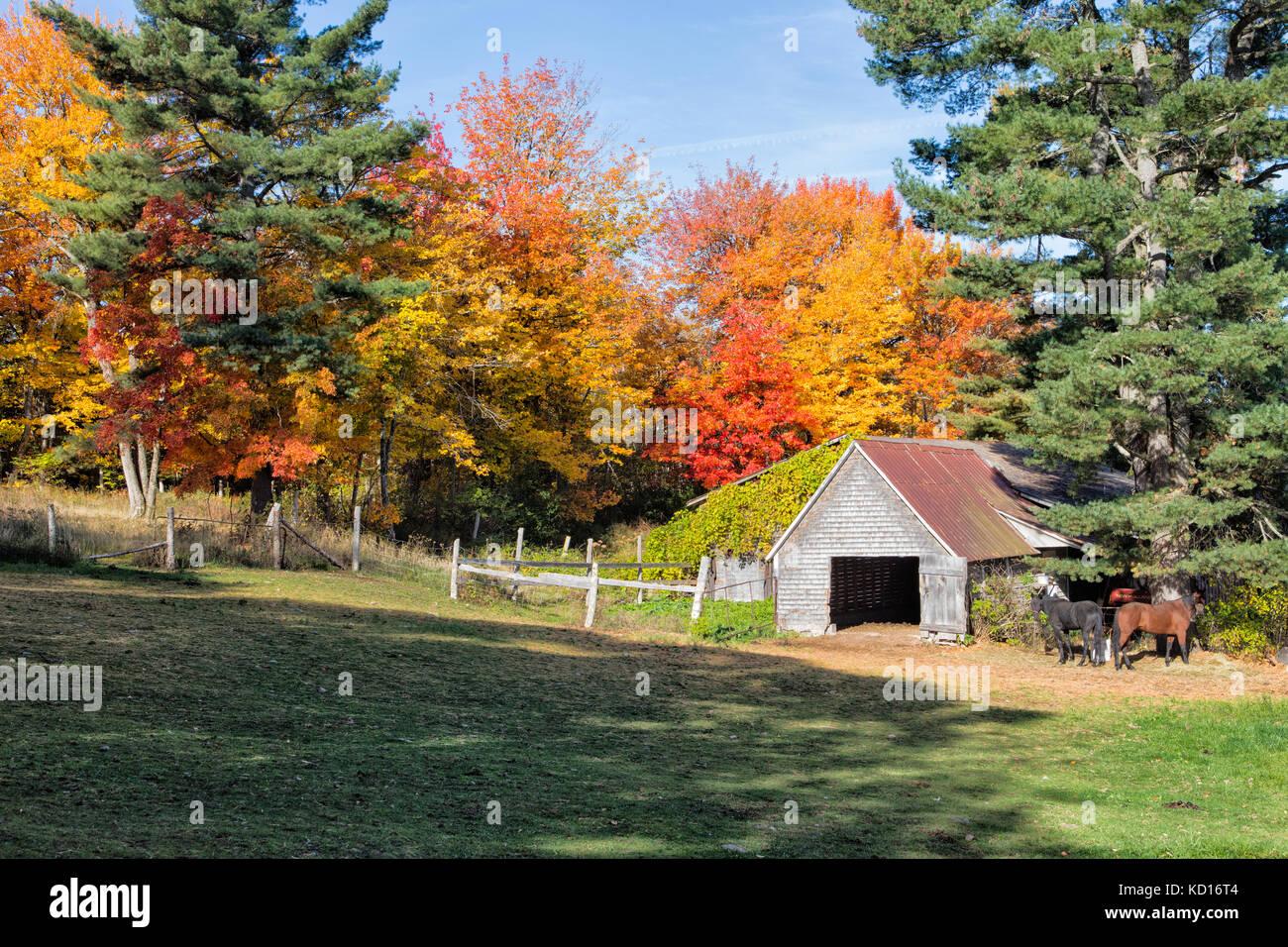 Bar and horses, Upper Hampstead, New Brunswick, Canada - Stock Image