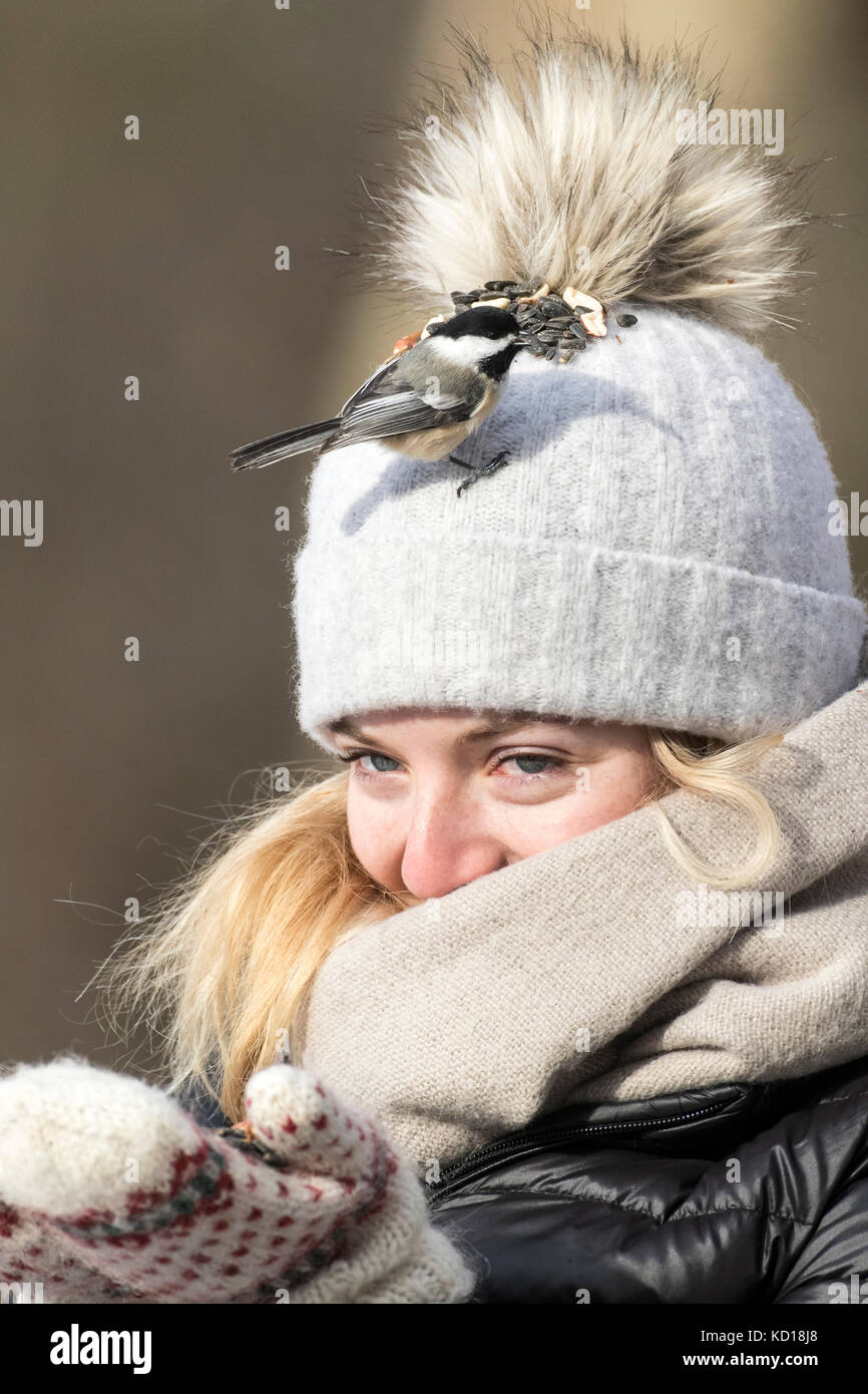 Young woman feeding chickadees on her toque, Lynde Shores Conservation Area, Whitby, Ontario, Canada - Stock Image