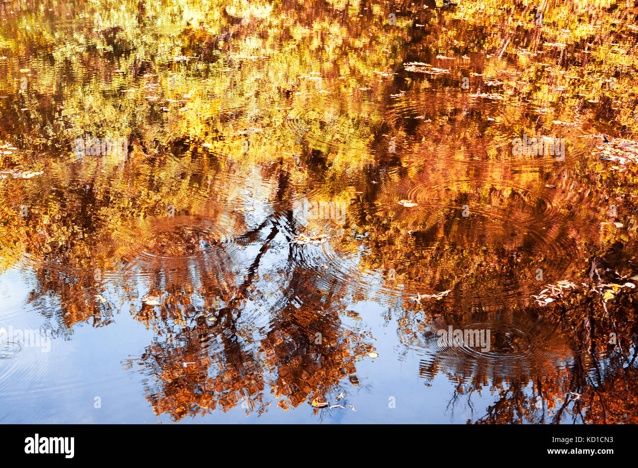 Water with reflections of orange and yellow autumn trees - Stock Image