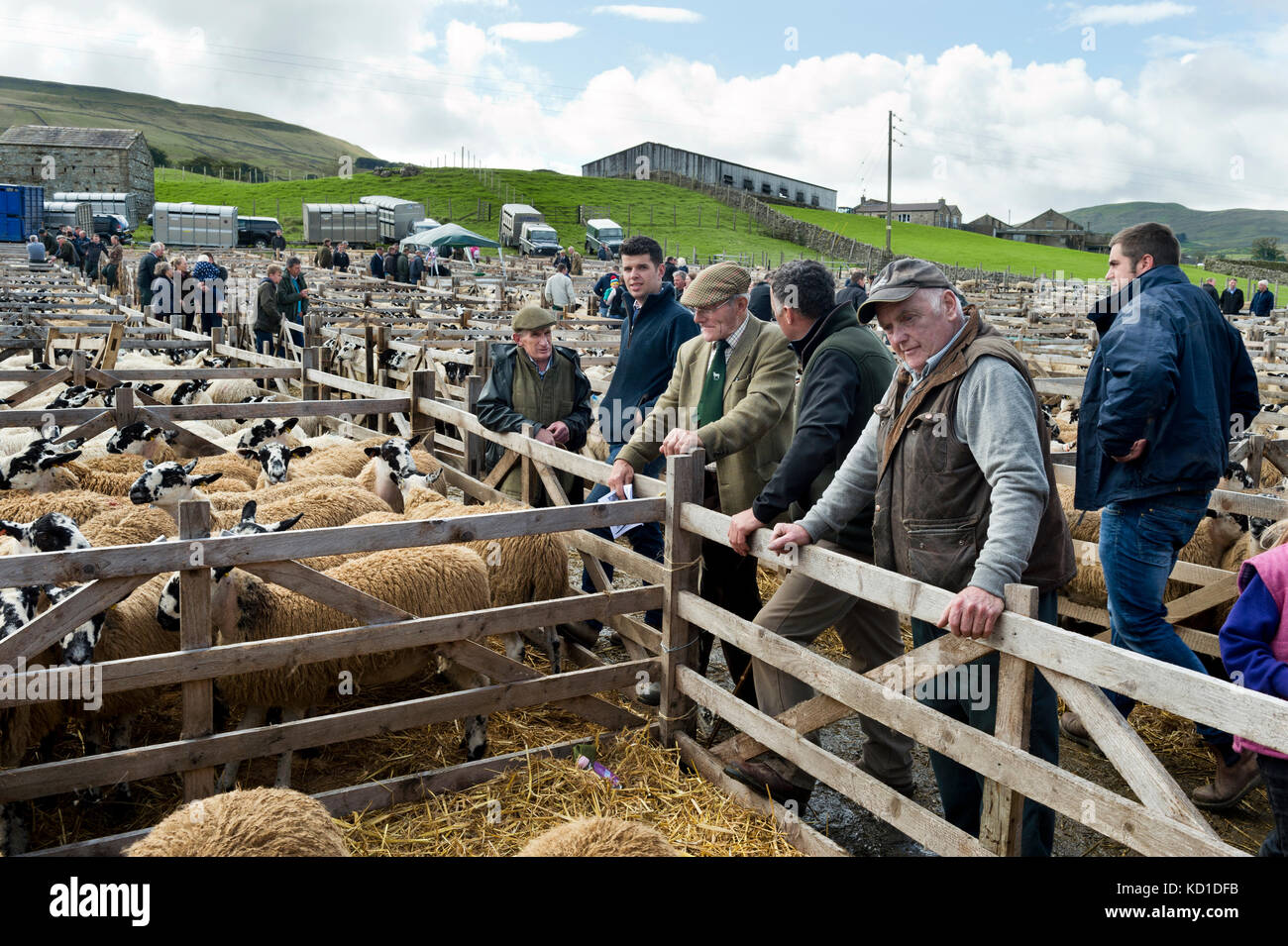 Major two day show and sale of mule gimmer lambs at Hawes Auction mart, North Yorkshire, UK - Stock Image