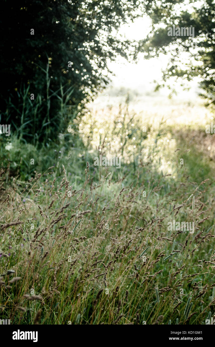 Meadow in summertime. Stock Photo