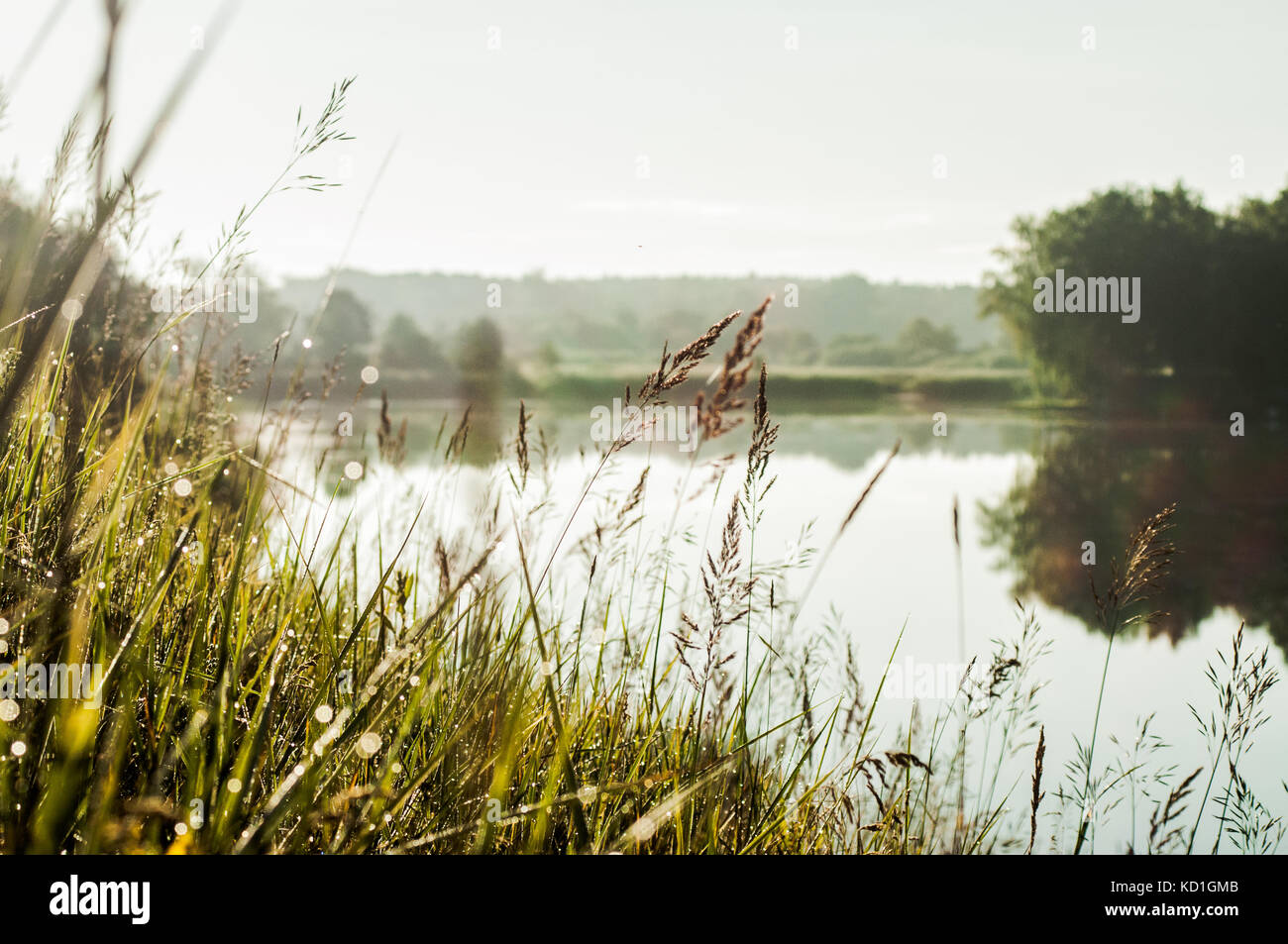 Romantic morning landscape with lake and tree reflections on it. - Stock Image