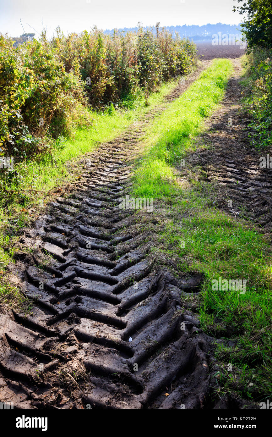 Heavy tractor tracks disappear into a field, between hedges and woodland, near Horsey, Norfolk, UK - Stock Image