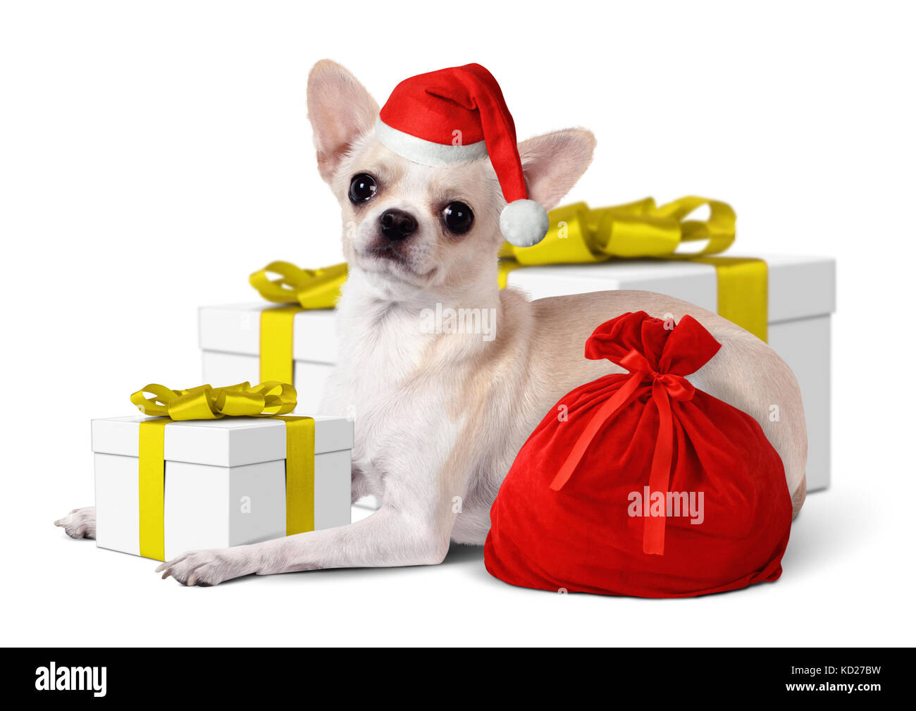 Chihuahua Dog with santa hat and yellow gift box, Christmas concept Stock Photo
