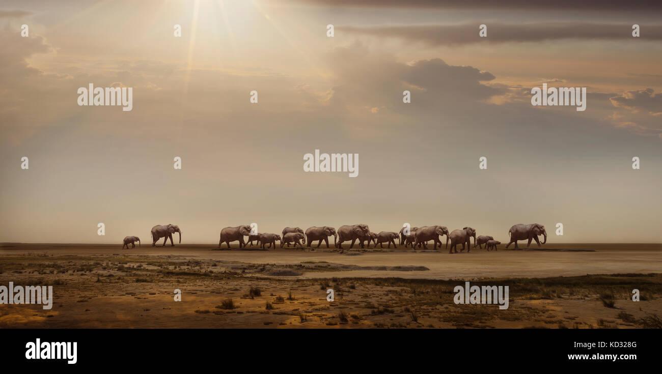 Herd of elephants in Namib Desert, Windhoek Noord, Namibia, Africa - Stock Image