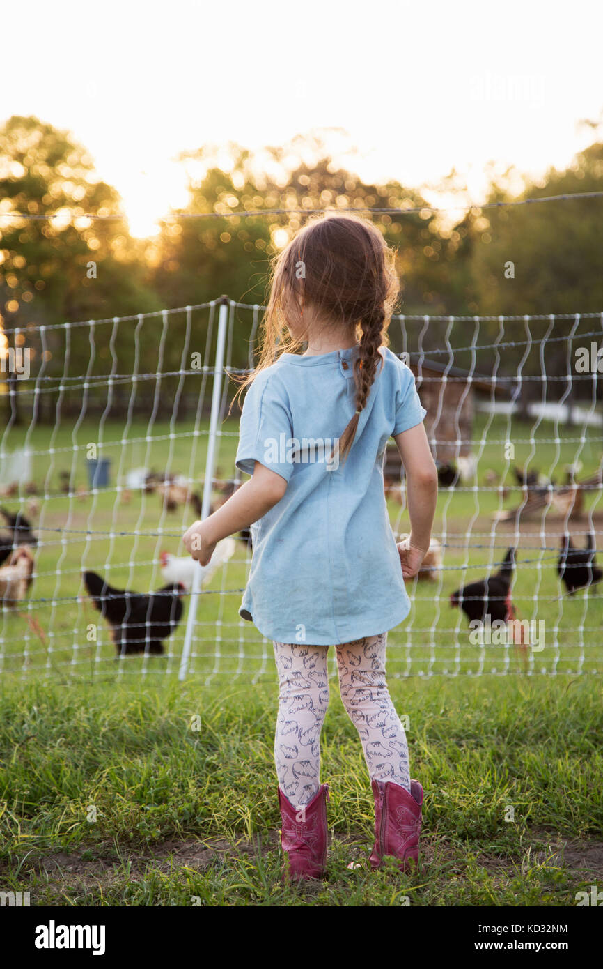 Young girl on farm, looking at chickens through wire fence, rear view - Stock Image