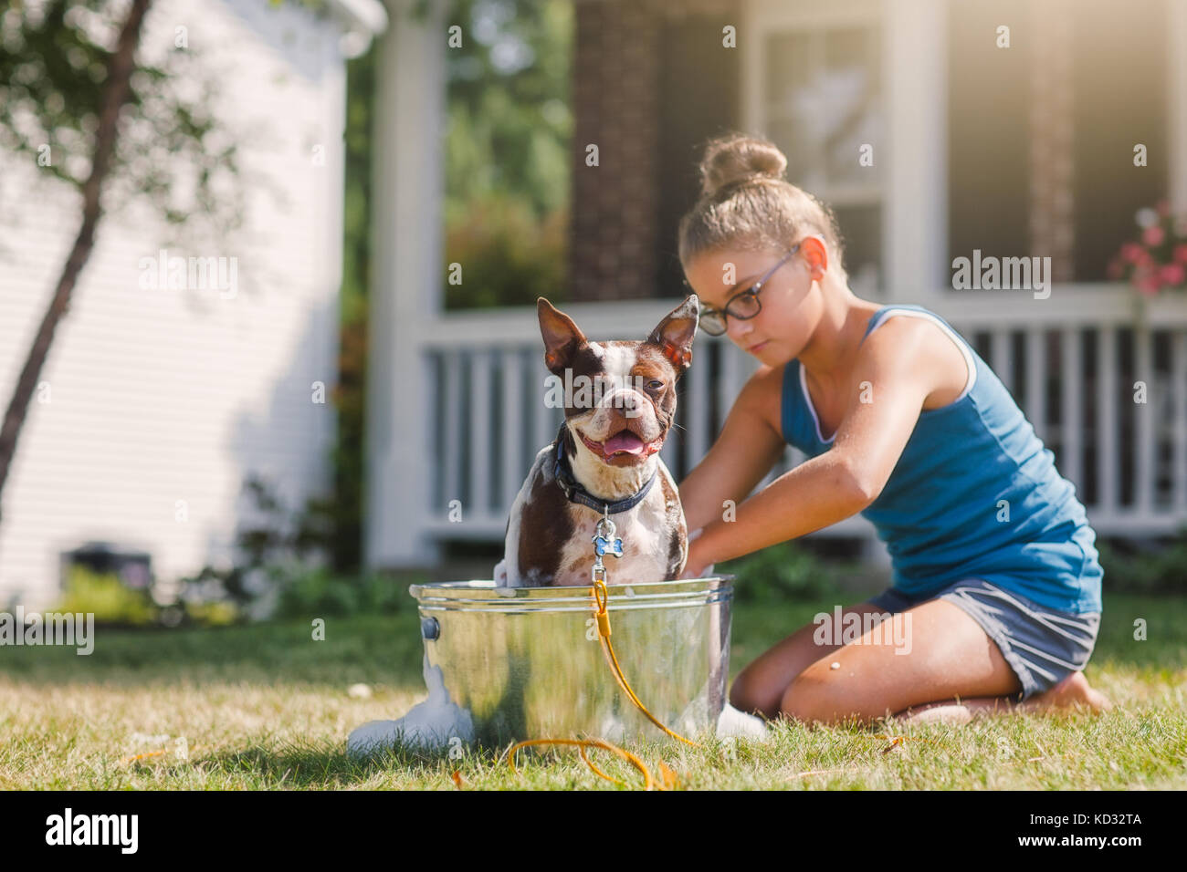 Girl washing dog in bucket - Stock Image