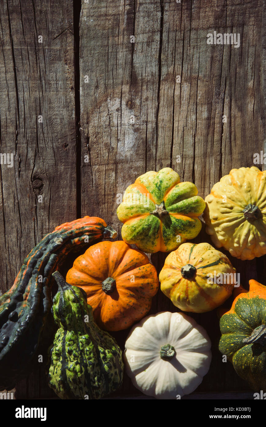 high-angle shot of an assortment of different pumpkins on a rustic wooden table with a blank space on top - Stock Image