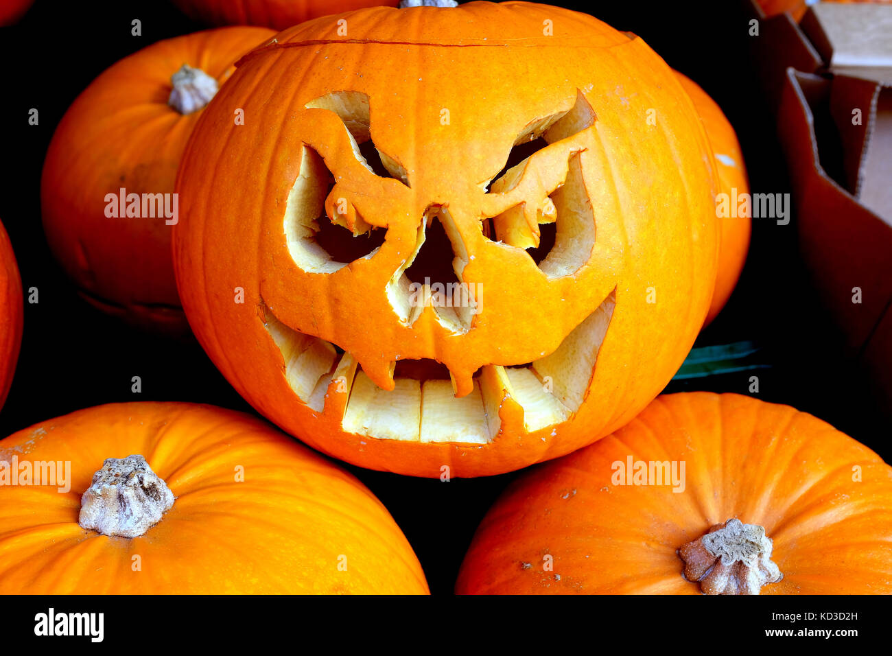 Bakewell, Derbyshire, UK. October 09, 2017. A gruesome face cut out of a pumpkin in group of pumpkins for sale outside - Stock Image
