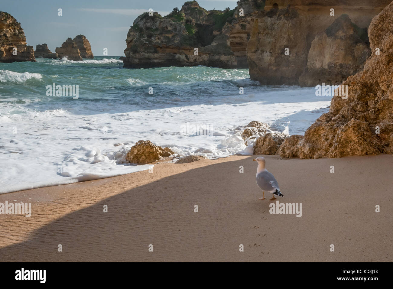 Sea bird walking along sandy beach surrounded by high cliffs, rock formations Stock Photo