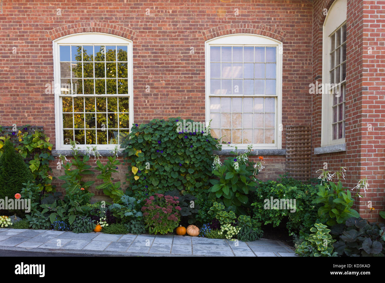 A fall themed garden in front of a brick building with shiny multi-paned windows in the background. - Stock Image