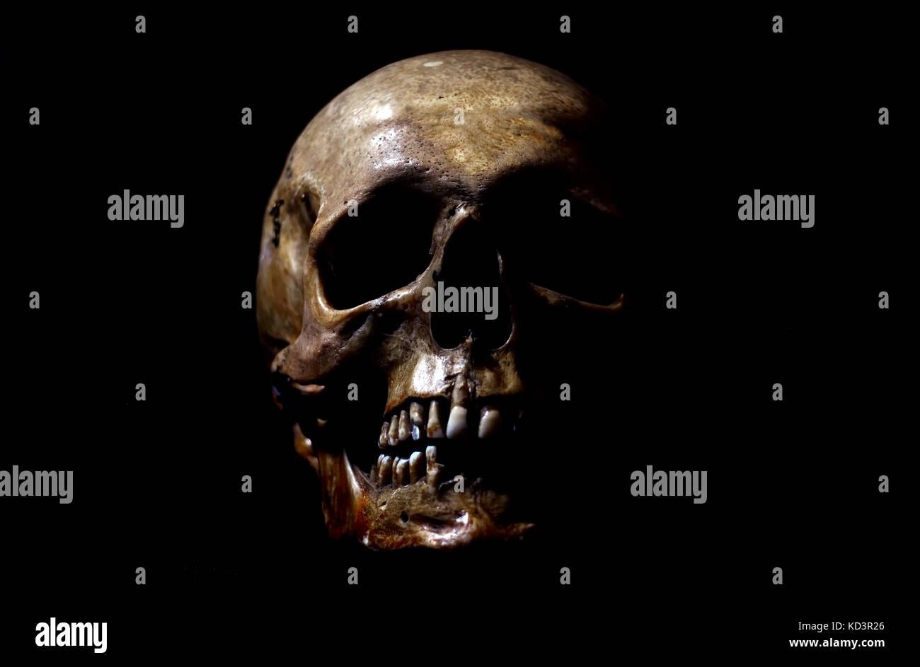Real human skull on black background Stock Photo