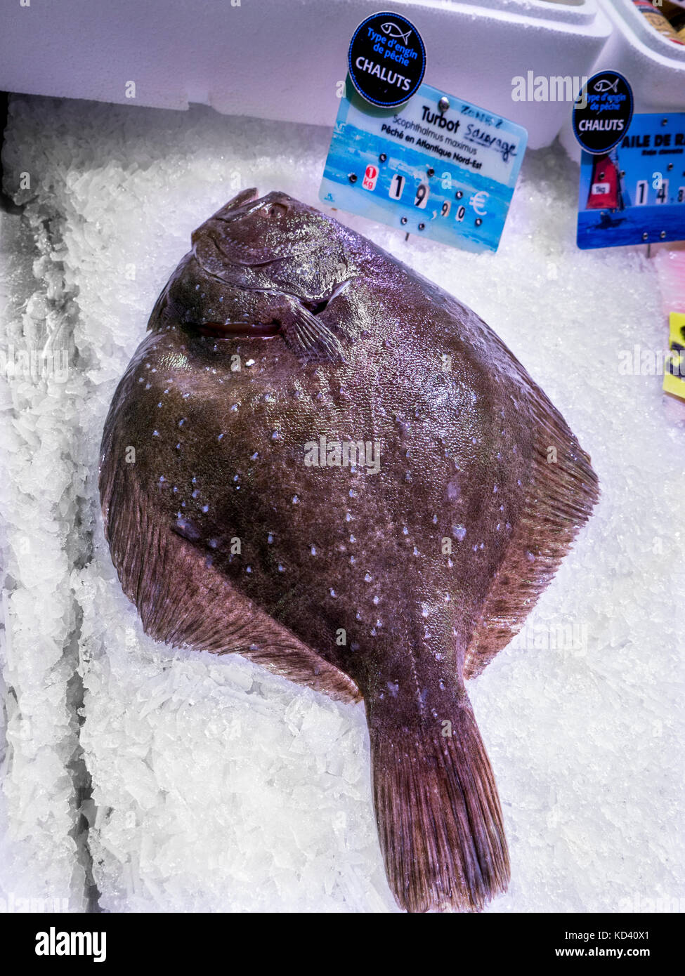 Turbot flatfish fresh in ice at Concarneau historic covered fish market Brittany France - Stock Image
