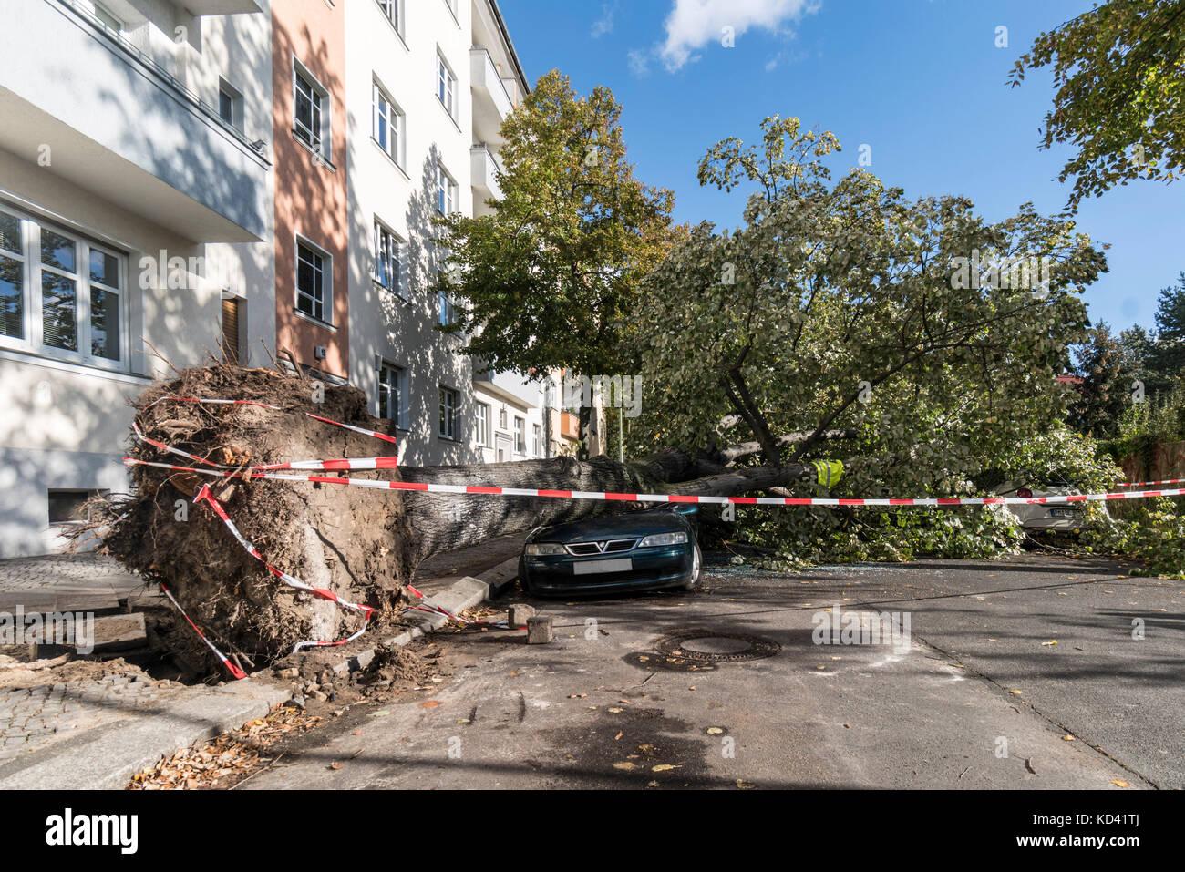 Storm Xavier, damage by falling tree | Sturmtief  Xavier wuetet ueber Deutschland am 5.10.2017 , umgestuerzter Baum Stock Photo