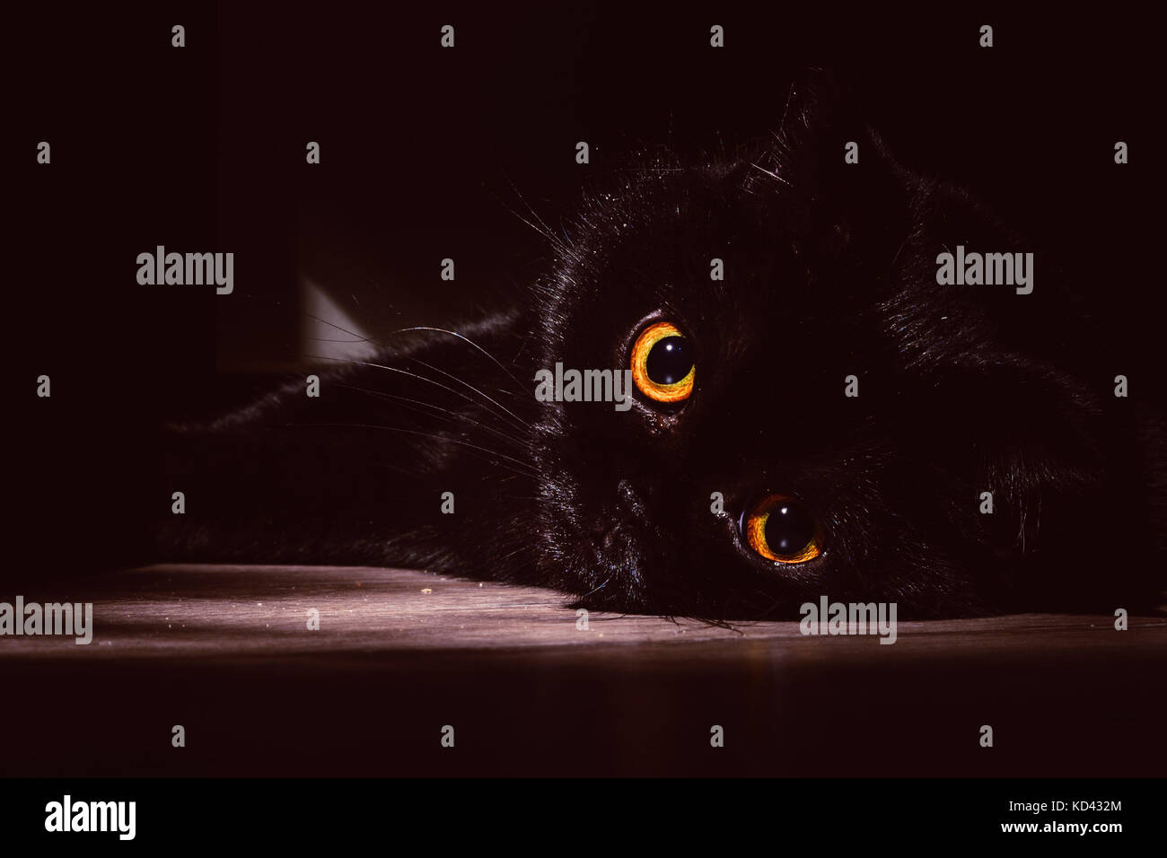 black cat lies on a roll in the darkness - Stock Image