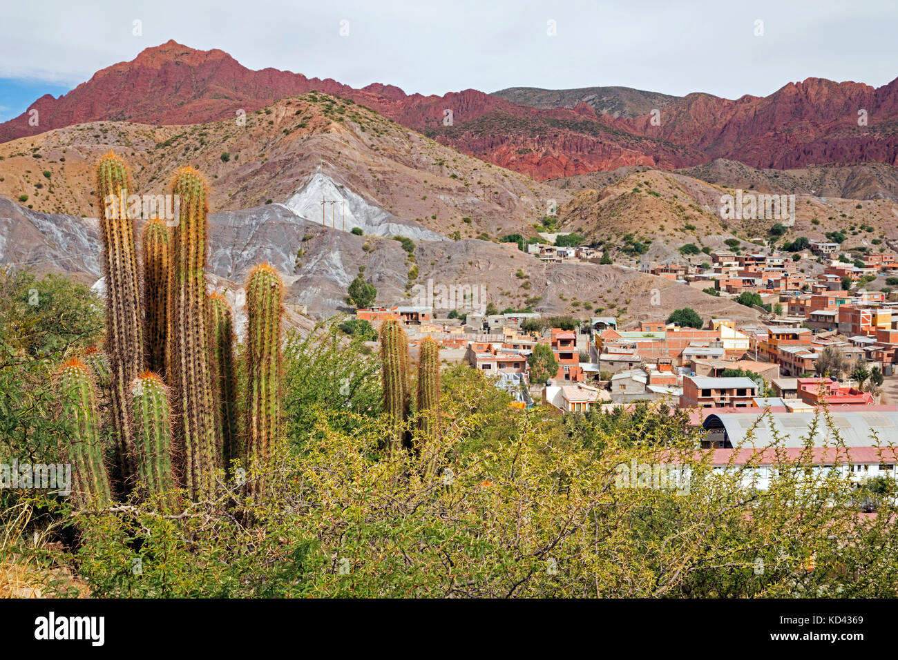 Cacti and aerial view over Tupiza, capital city of the Sud Chichas Province within the Potosí Department, Bolivia - Stock Image