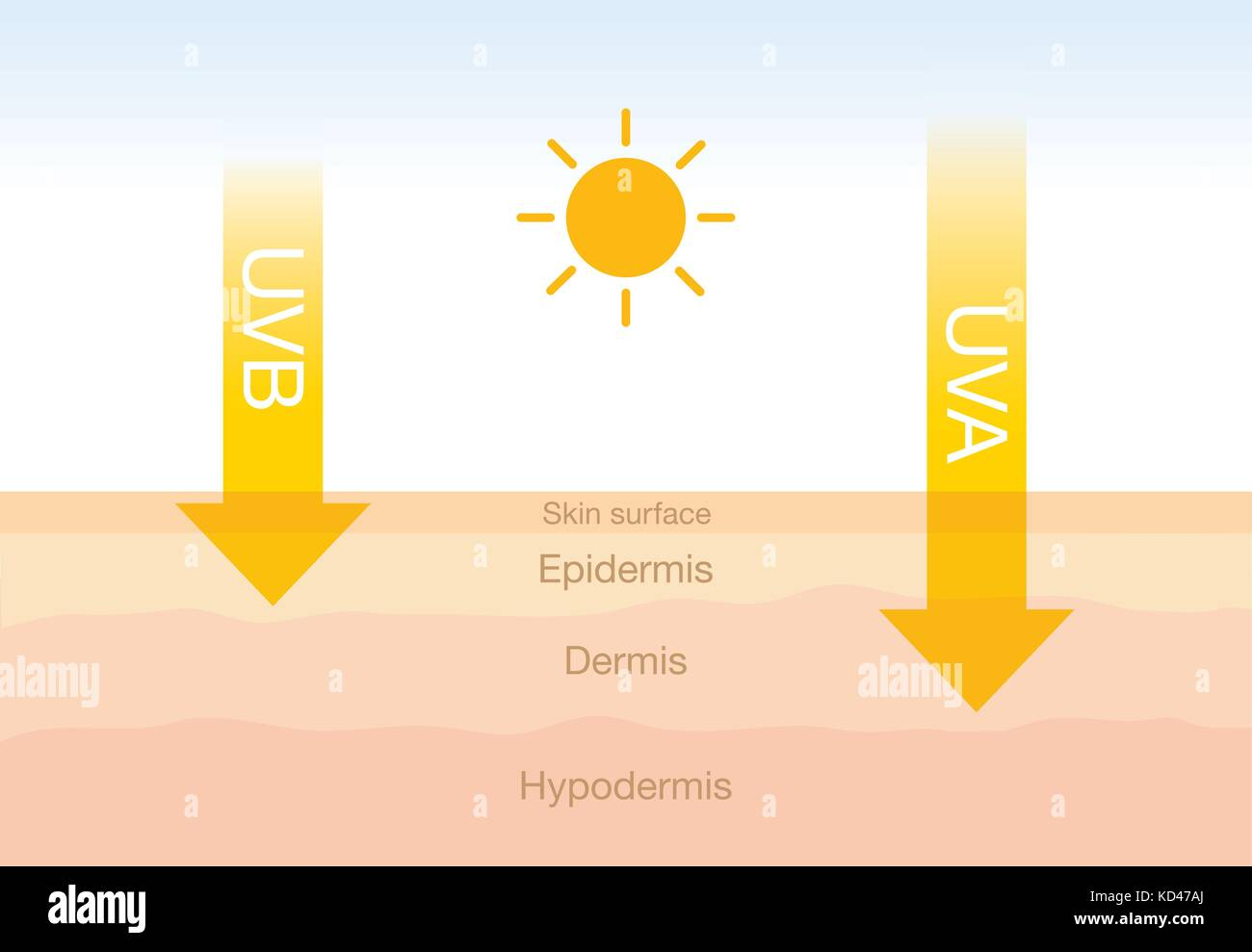 The difference of radiation 2 types in sunlight with skin. - Stock Vector