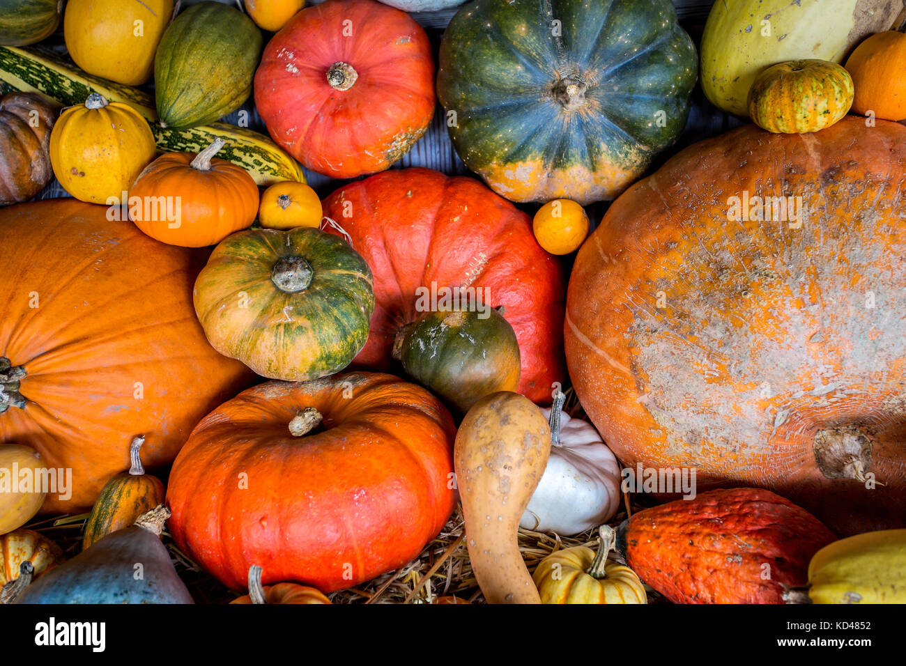 Assorted colourful pumpkins, squashes and gourds - Stock Image