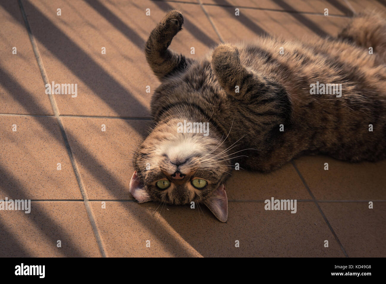 Cat playing on a balcony Stock Photo