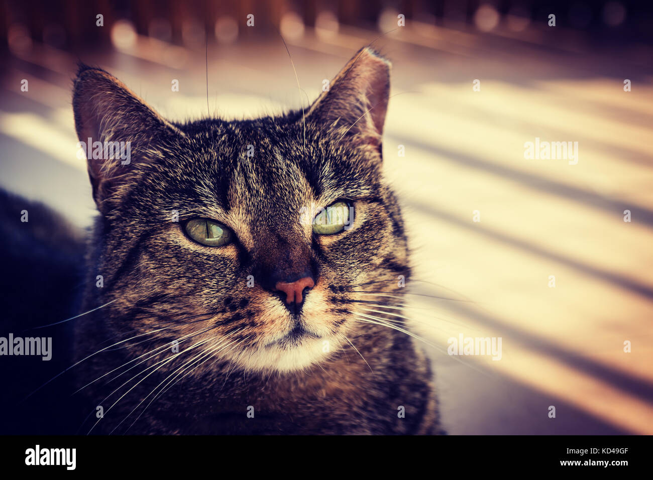 Cat lying on a balcony, posing to a photo. Vignette, high contrast photo Stock Photo