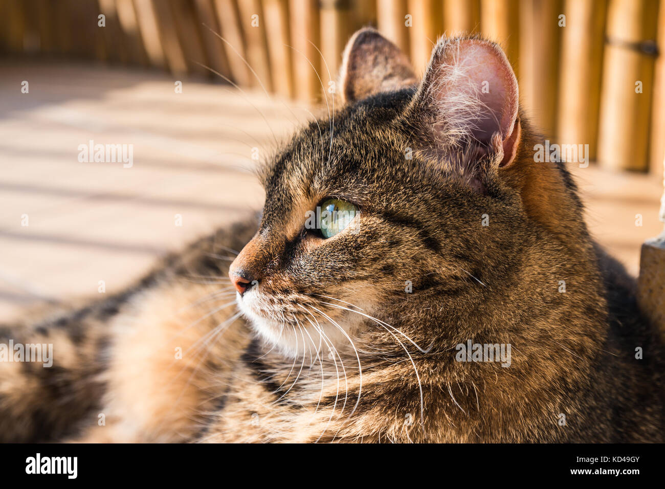 Cat lying on a balcony, posing to a photo Stock Photo
