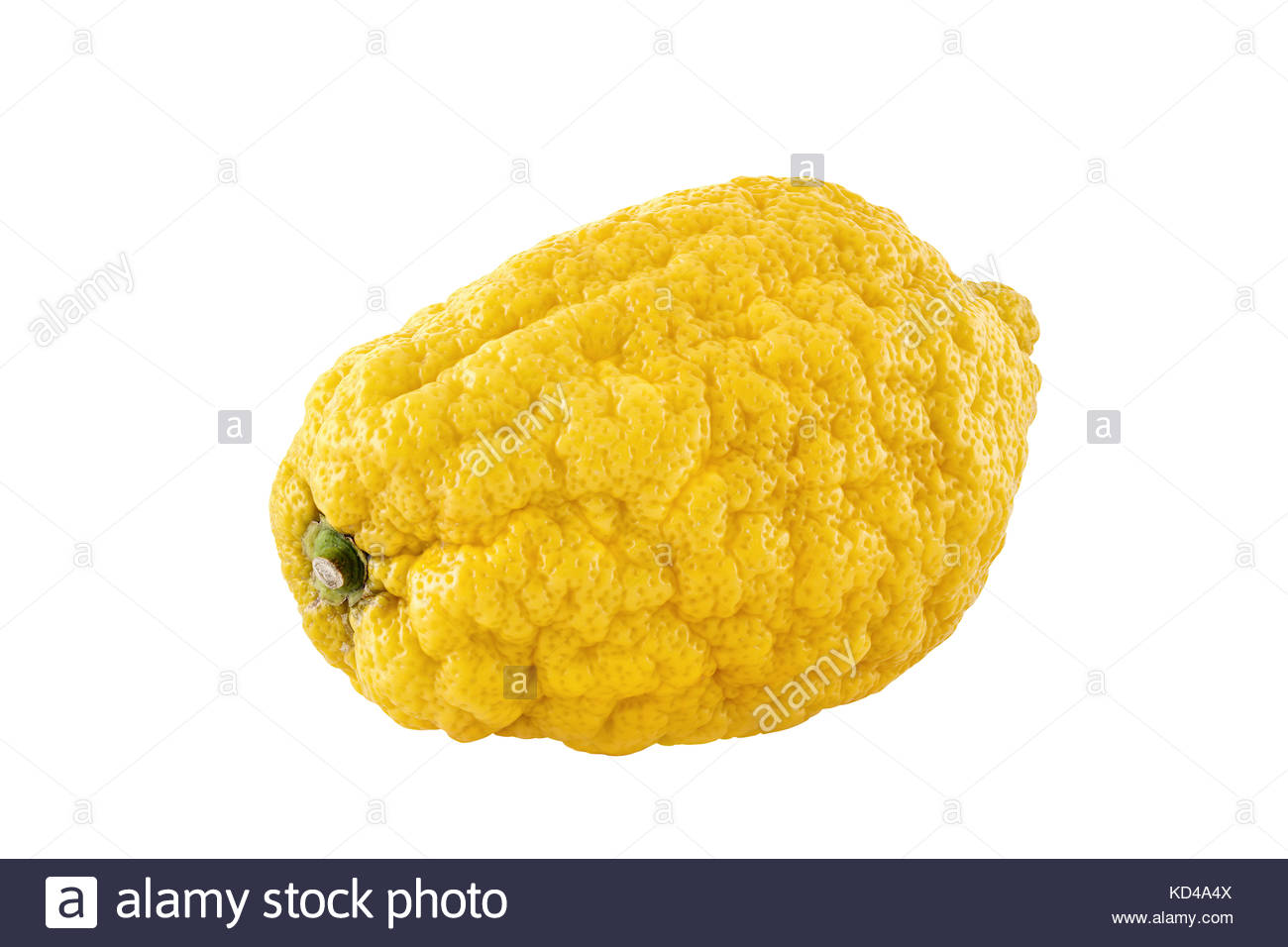 A citron fruit reflected on a white background. Citrons are available all year round. They are a versatile ingredient - Stock Image