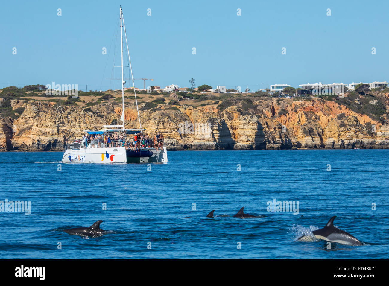 PORTUGAL - SEPTEMBER 12TH 2017: A Dolphin watching boat trip off the coast of Lagos in the Algarve, Portugal, on - Stock Image