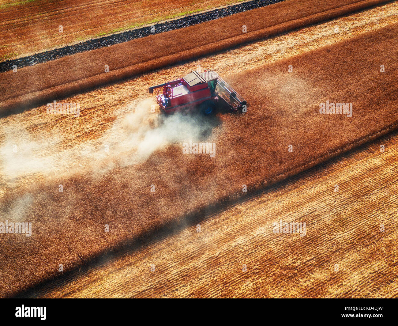 Aerial view of Combine harvester agriculture machine harvesting golden ripe wheat field - Stock Image