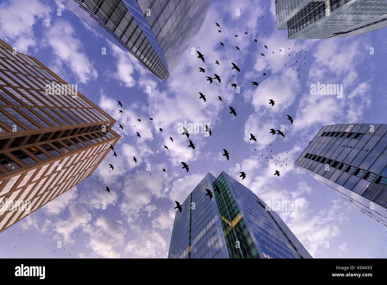 Flock Of Black Birds Flying Between Skyscrapers Buildings, Arlington, Virginia, USA - Stock Image